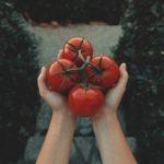 Обработка семян томатов перед посевом на рассаду