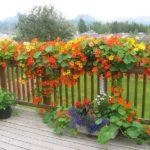 Лучшие вьющиеся растения для дачи и сада