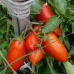 Рассада томатов из семян в домашних условиях