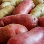 Какой картофель выращивать в средней полосе