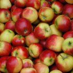 Как посадить яблоню весной